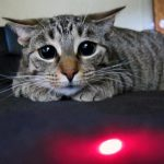 the best laser pointers on the market for feline play