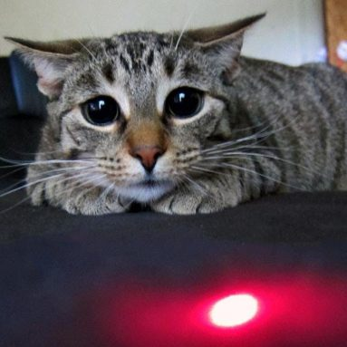 Best Laser Pointers for Cats 2018